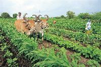 Green Revolution in Eastern Region
